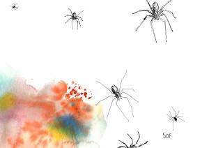 araignée6
