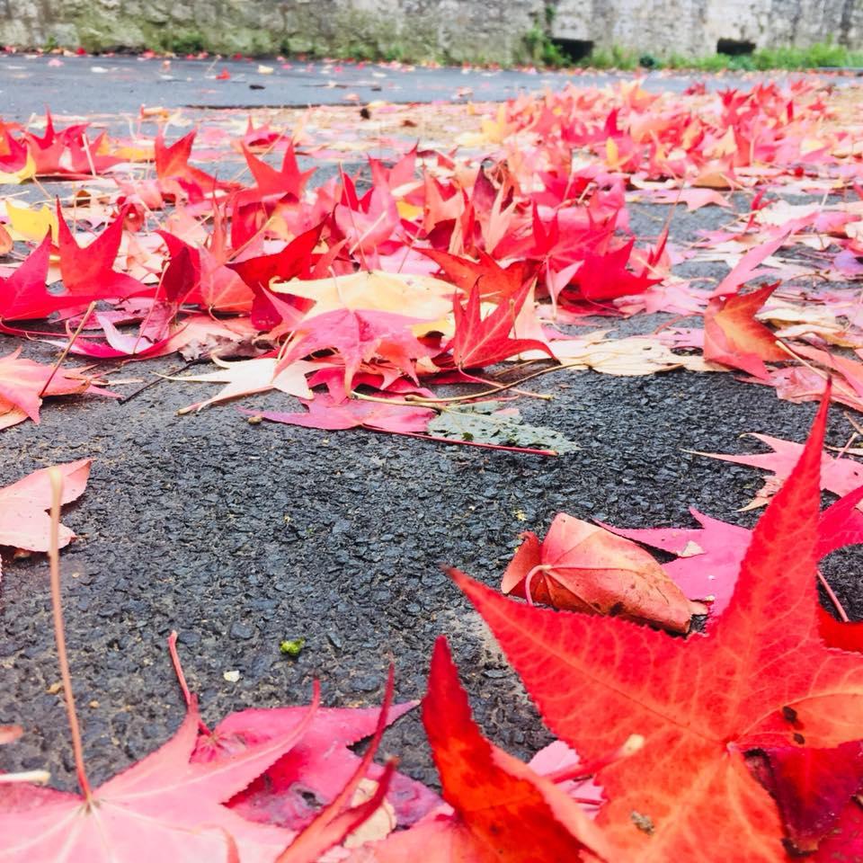 L'automne – Novembre 2019